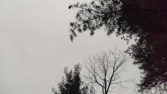 IMAG0132.jpg